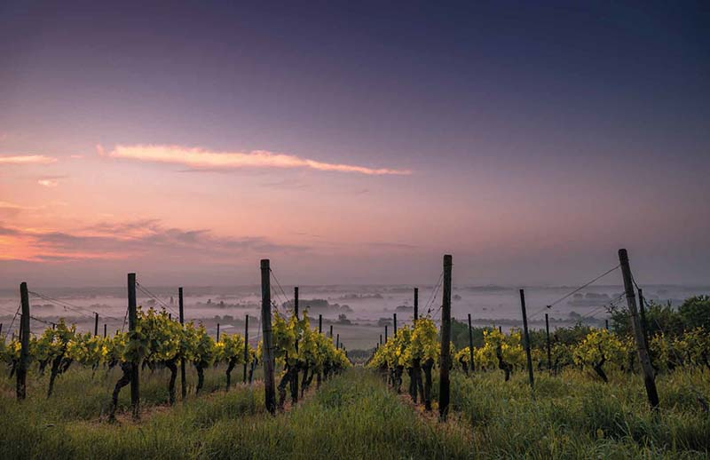 Winery 2017